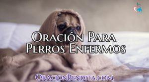 oracion para perros enfermos
